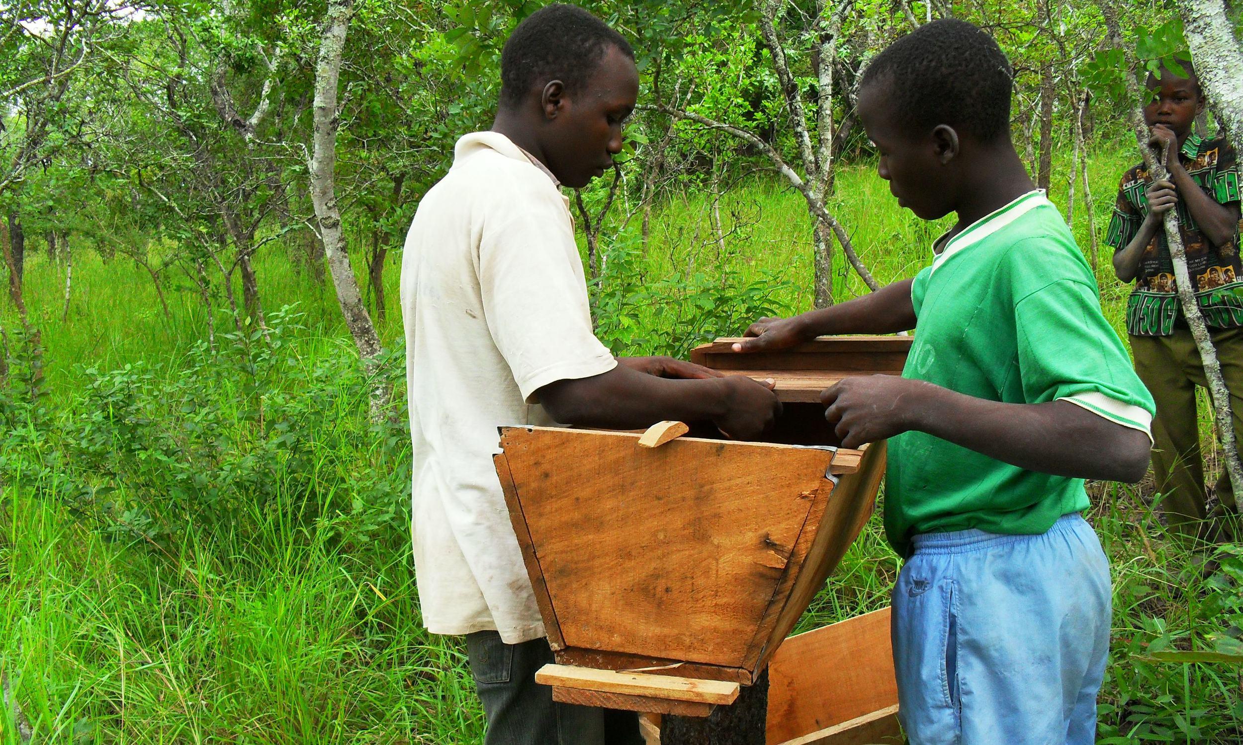 Colocação em terreno  - Installing them in the field