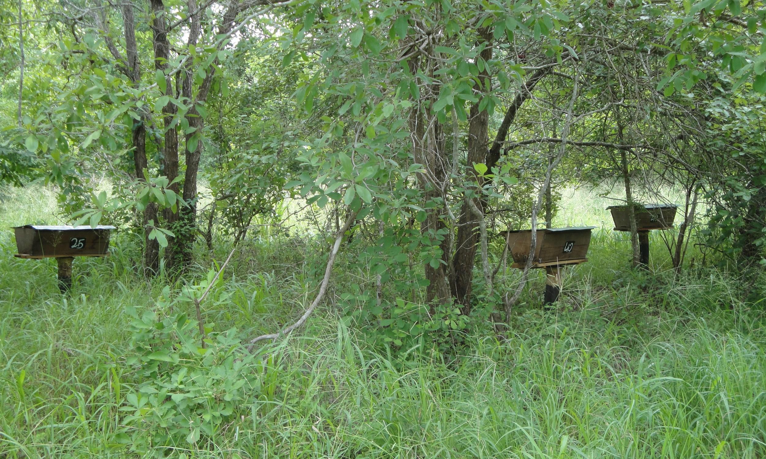 Colmeias já no sítio  - Hives in the field