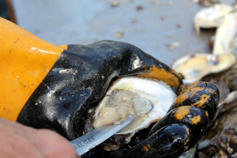 Stylish Bites :: Celebrating National Oyster Day. Image via Jessica Gordon Ryan/The Entertaining House