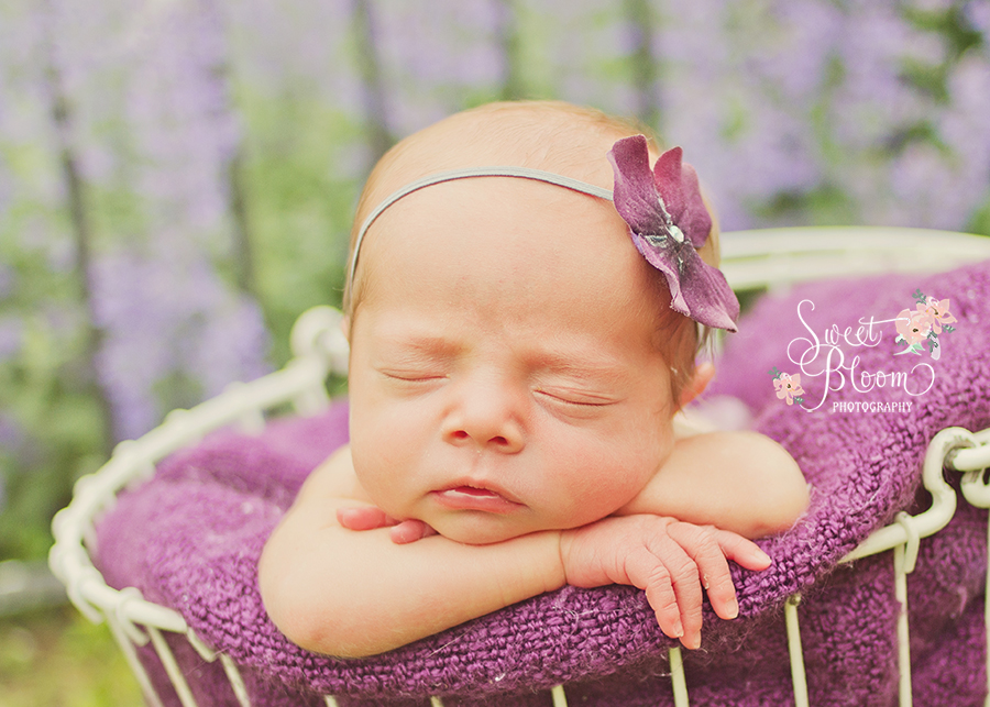 dayton ohio newborn photographer violet 1.jpg