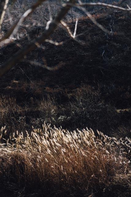 dried grass (vertical).jpg