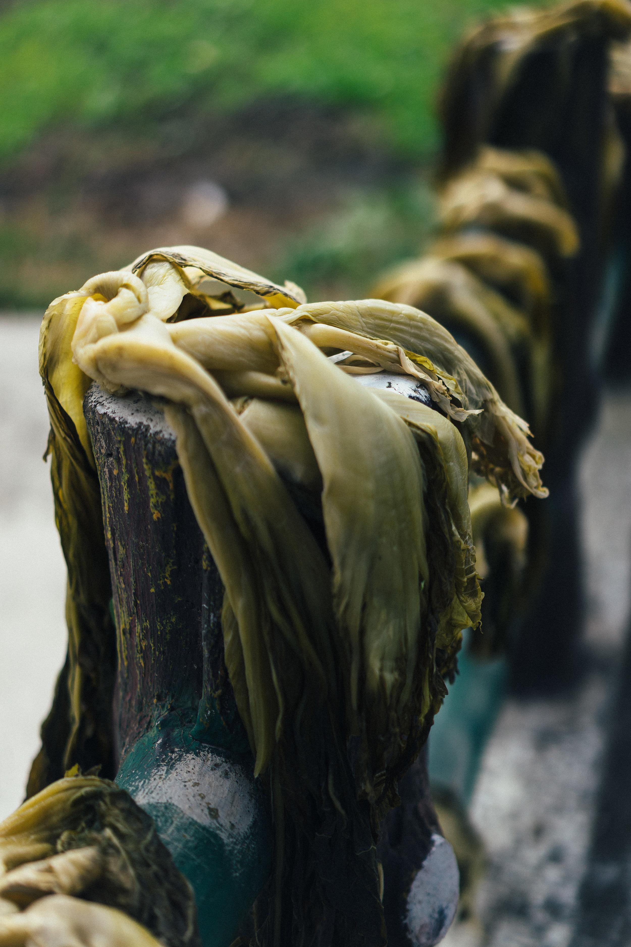 Mustards closeup (vert).jpg