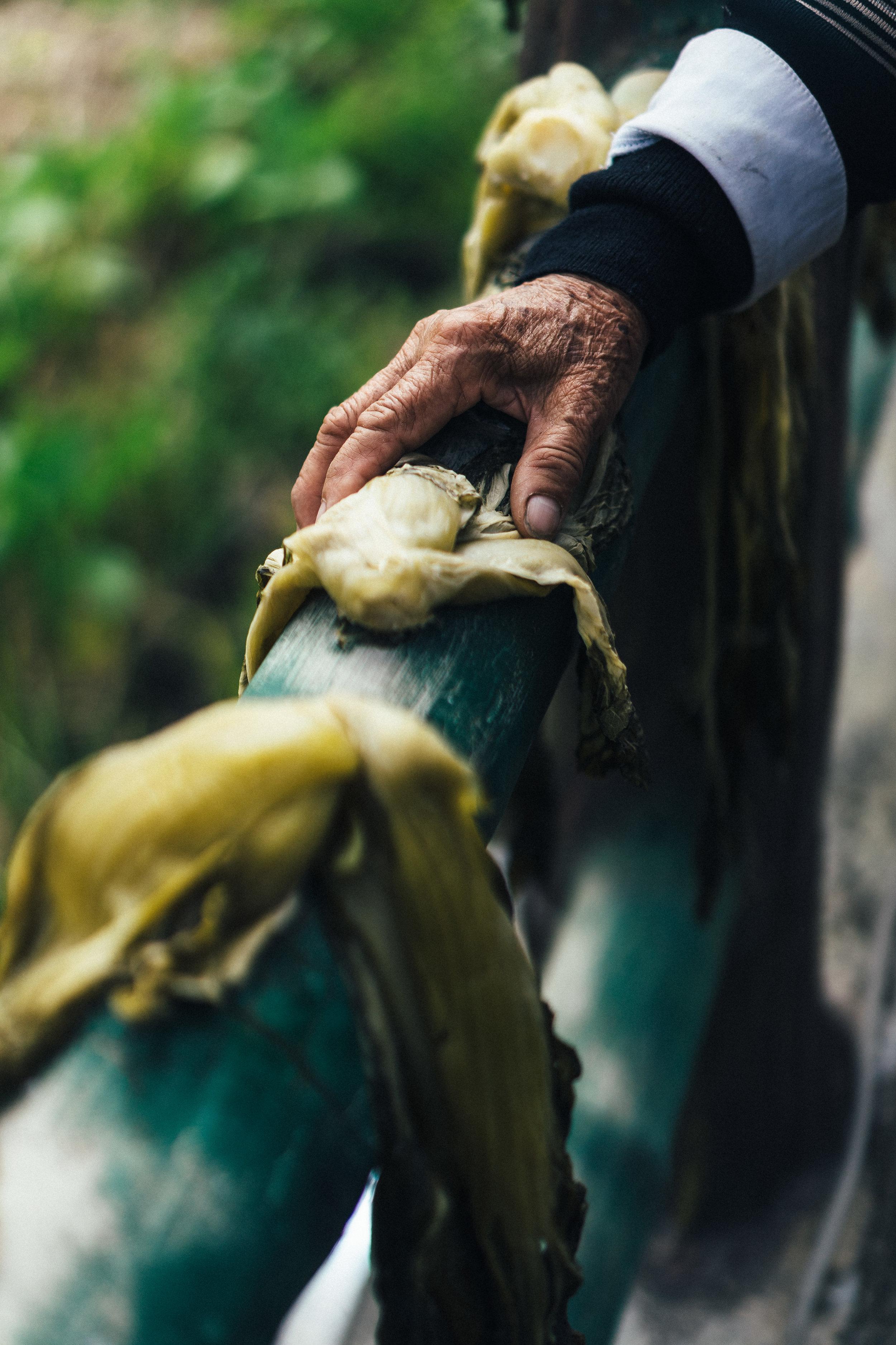 Mustard hands (vert).jpg