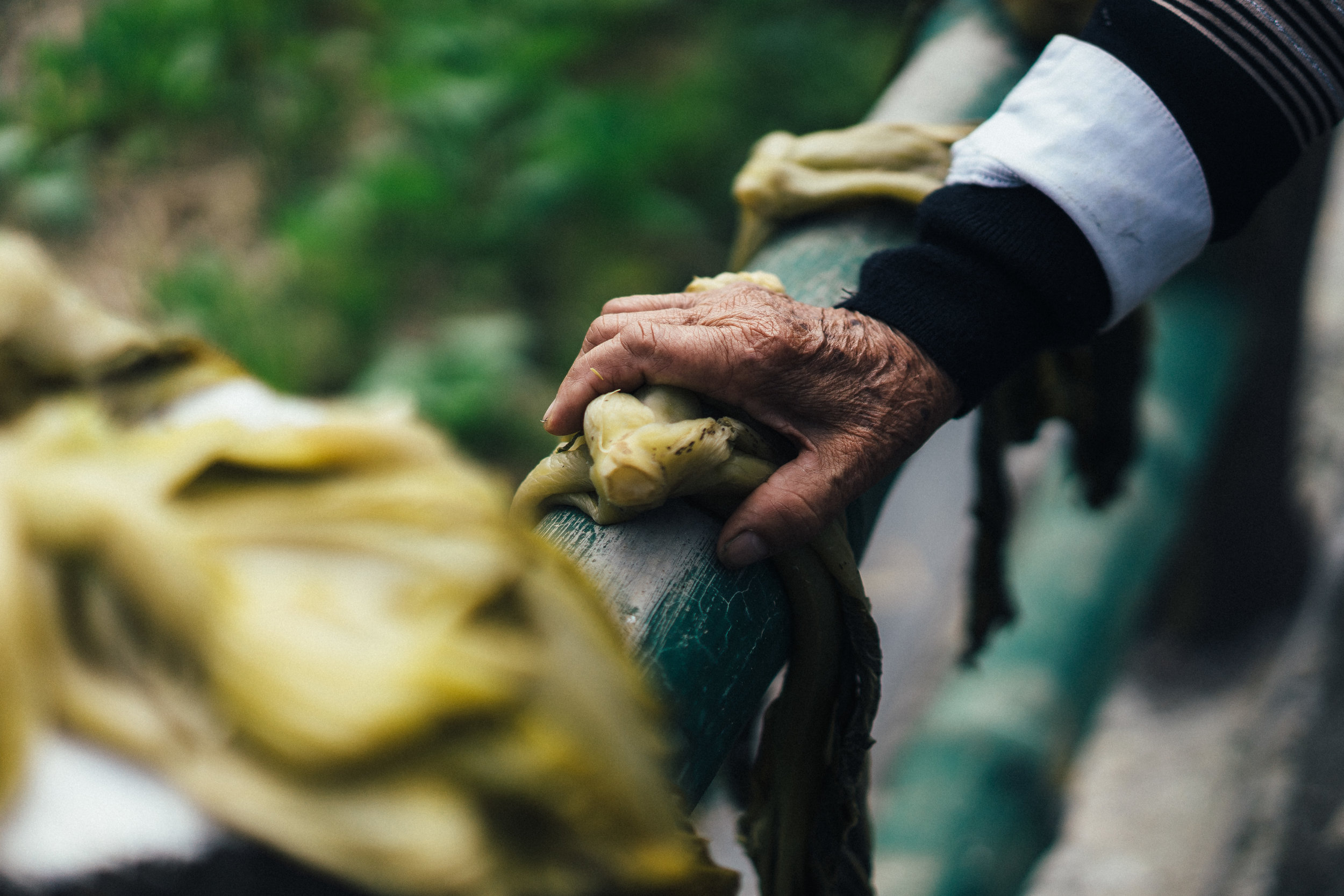 Mustards hands closeup (horiz).jpg