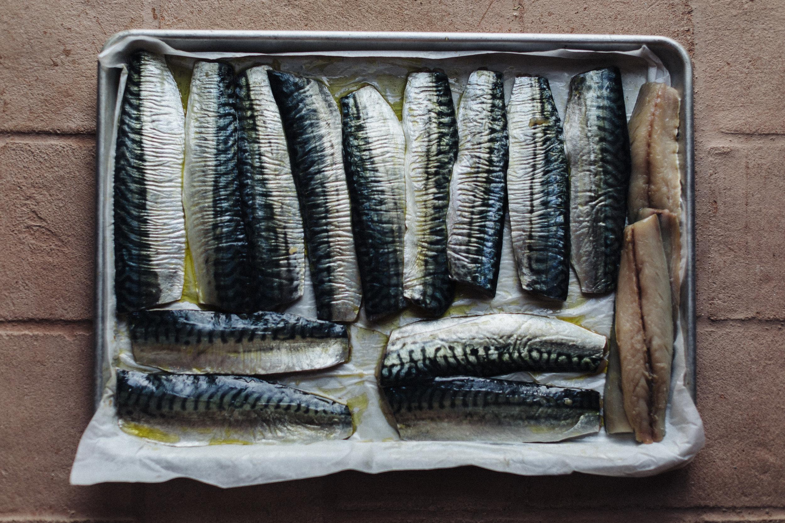 Mackerel.jpg