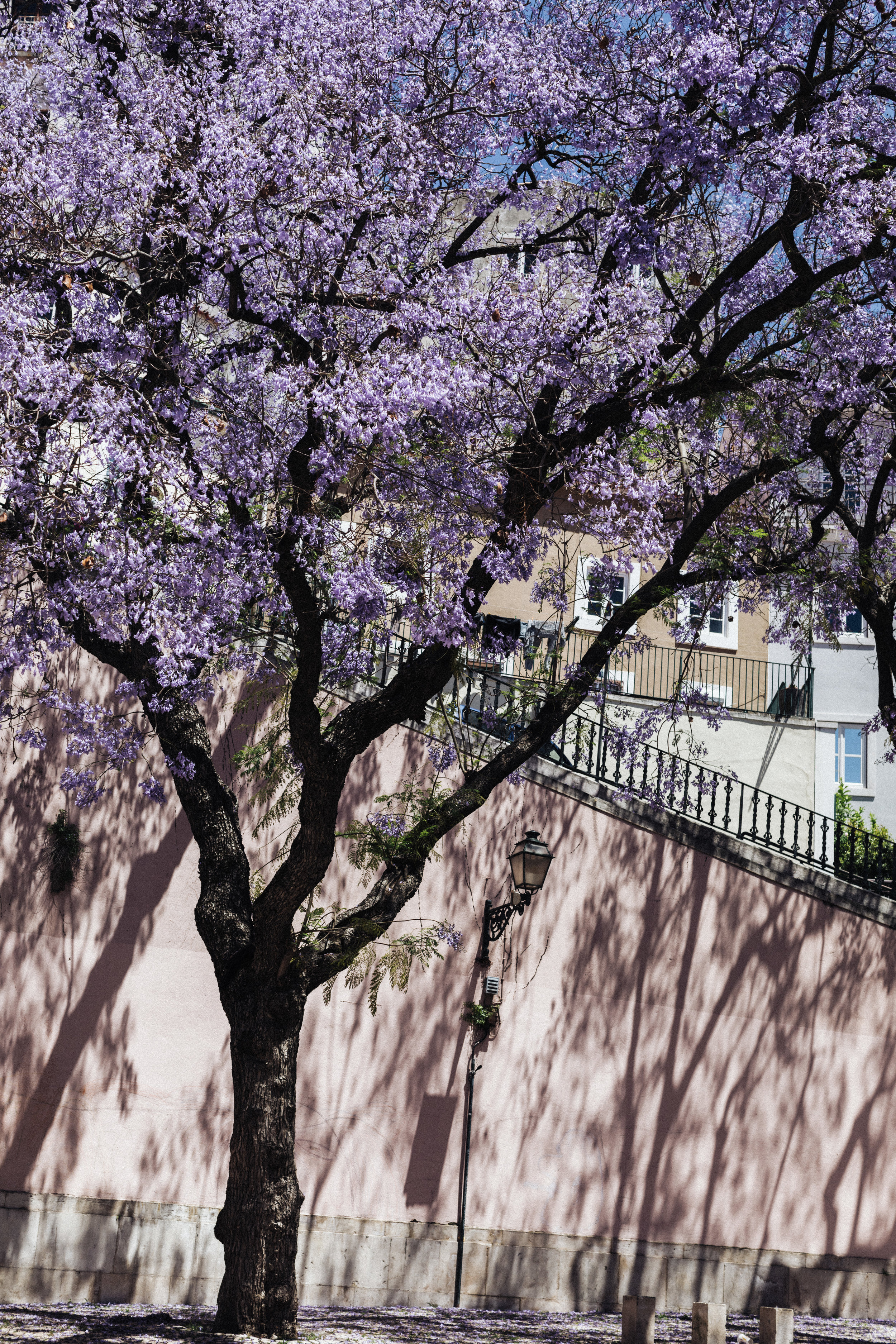 Lisbon Pink and Purple.jpg