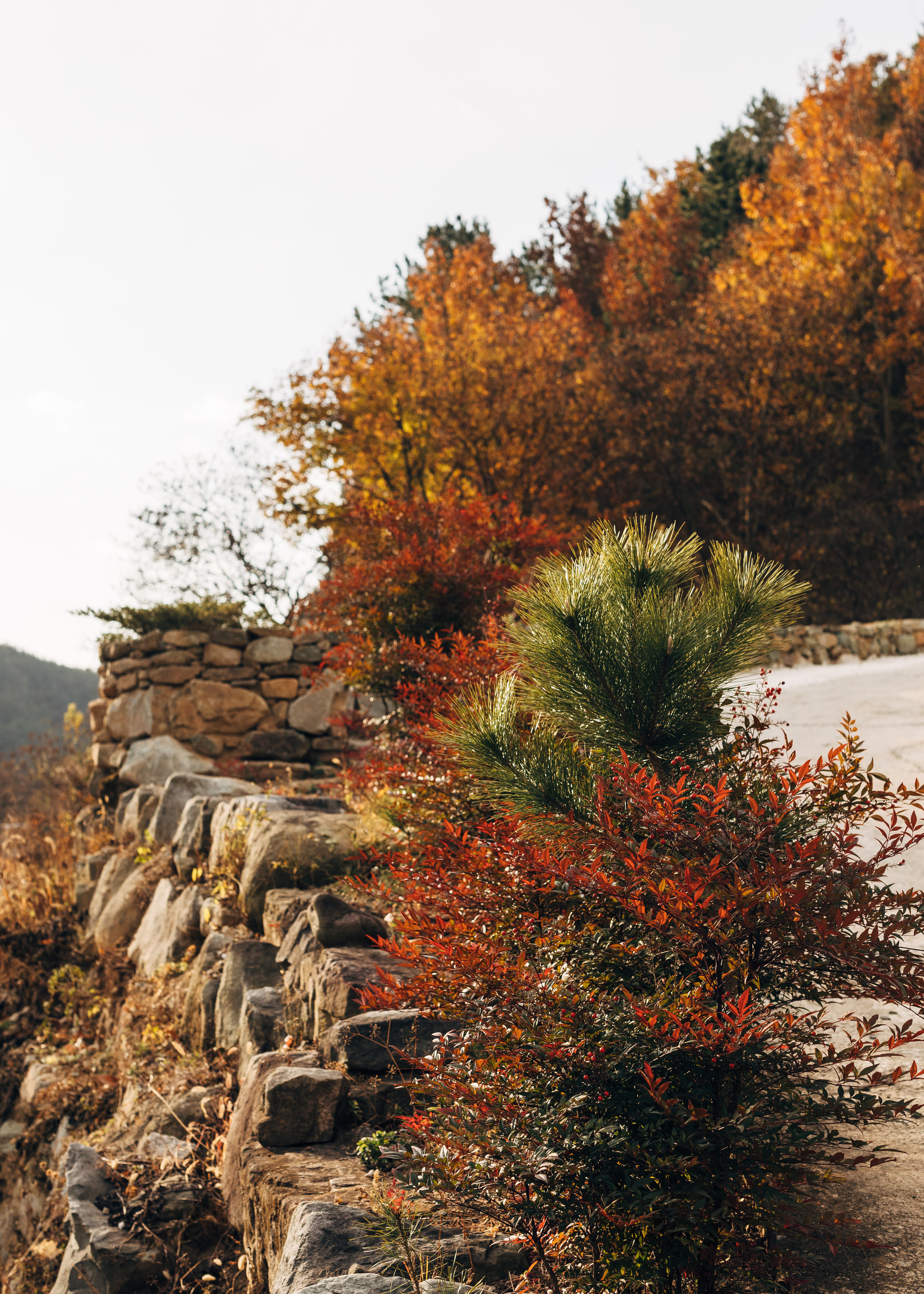Pine and Colours.jpg