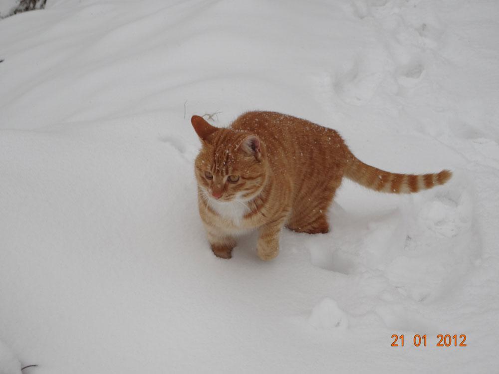 2012-snow09-