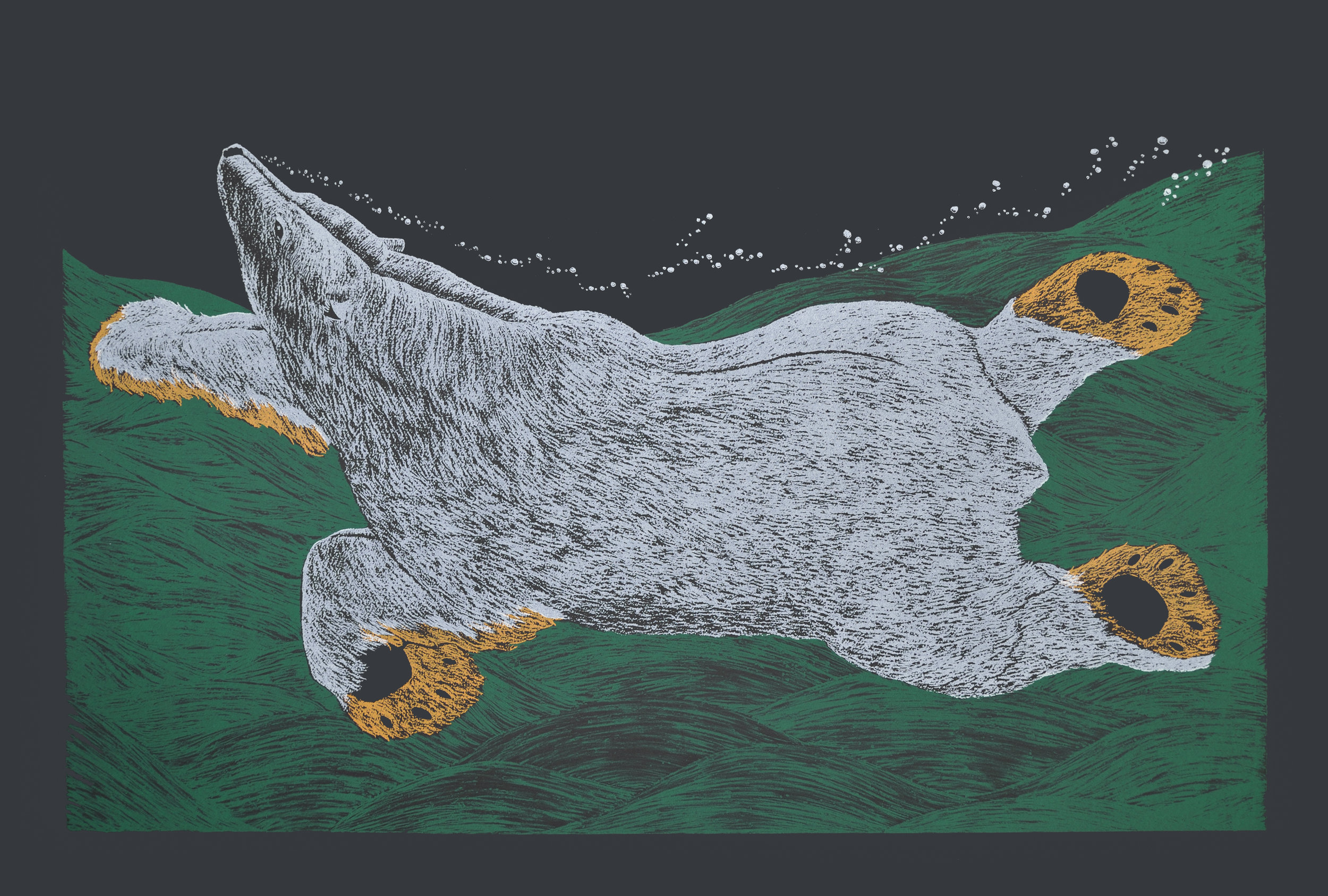 Tim Pitsiulak SWIMMING BEAR, 2016 Screenprint on Arches Cover Black Printer: Open Studio 76.5 x113 cm edition of 50