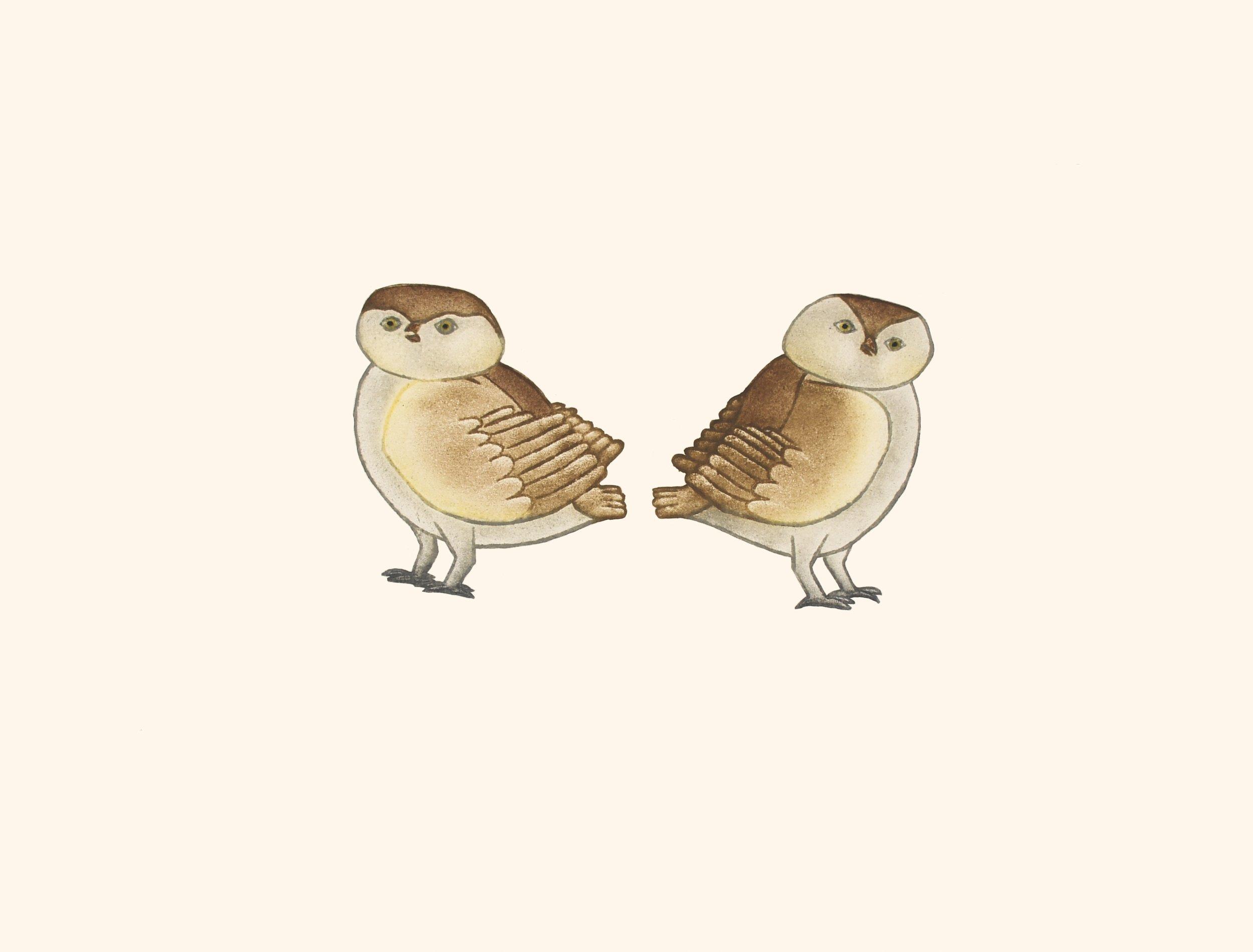KILLIKTEE KILLIKTEE  24. Owlettes  Etching & Aquatint  Paper: Arches White  Printer: Studio PM  29.3 x 38.3 cm  $ 500