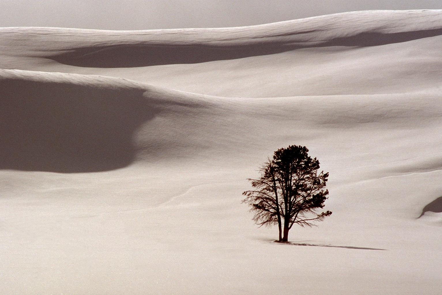 lone tree hi res jpeg.jpg