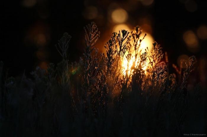 Magic Hour Nature - Holli Z Photography - 7.jpg