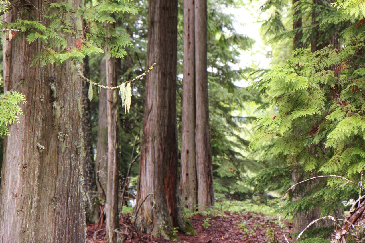 Trees & Forests Nature - Holli Z Photography - 1.jpg