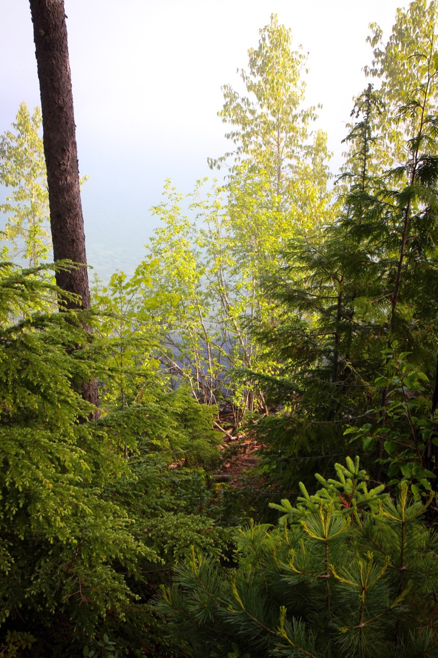 Trees & Forests Nature - Holli Z Photography - 3.jpg