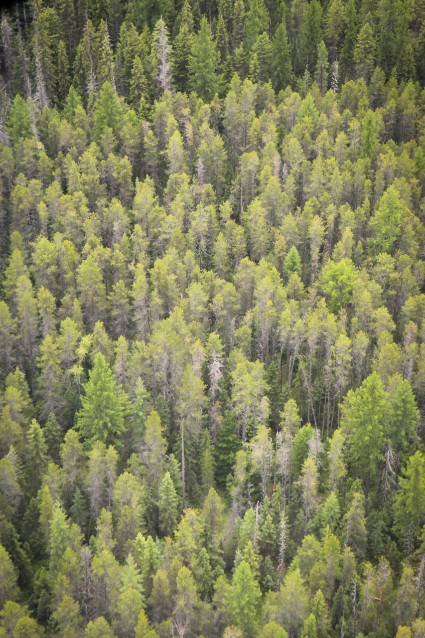 Trees & Forests Nature - Holli Z Photography - 10.jpg