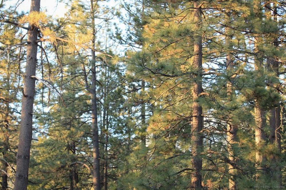 Trees & Forests Nature - Holli Z Photography - 16.jpg