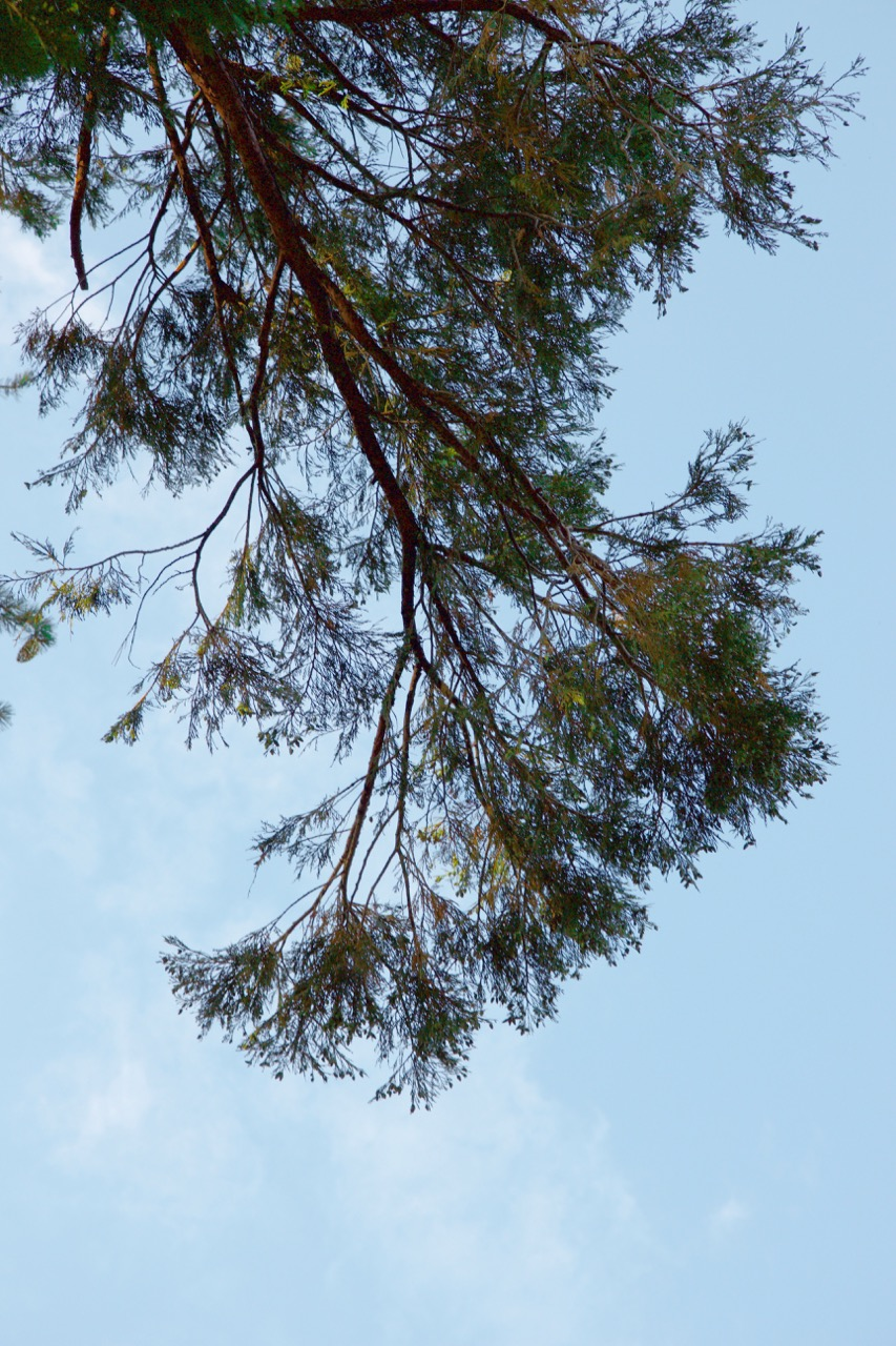 Trees & Forests Nature - Holli Z Photography - 20.jpg