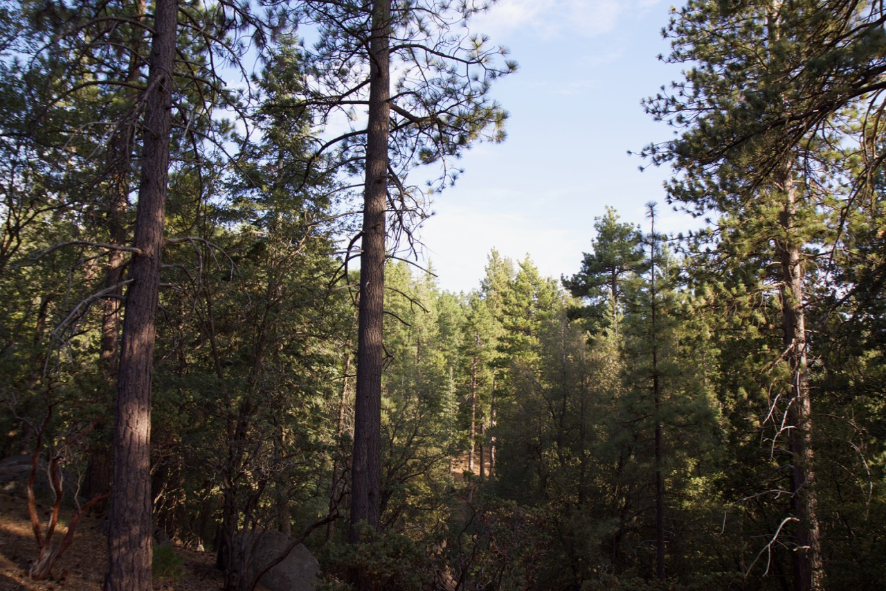 Trees & Forests Nature - Holli Z Photography - 19.jpg