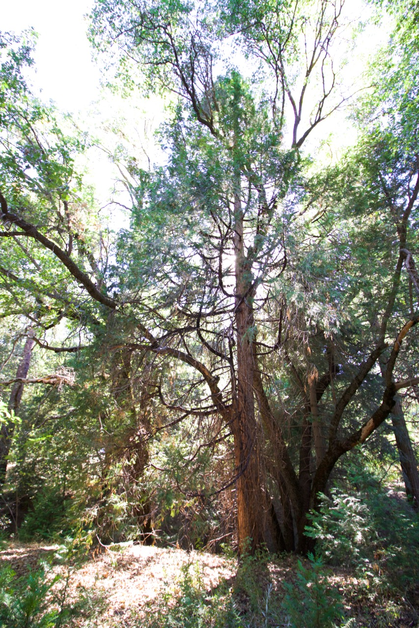 Trees & Forests Nature - Holli Z Photography - 22.jpg