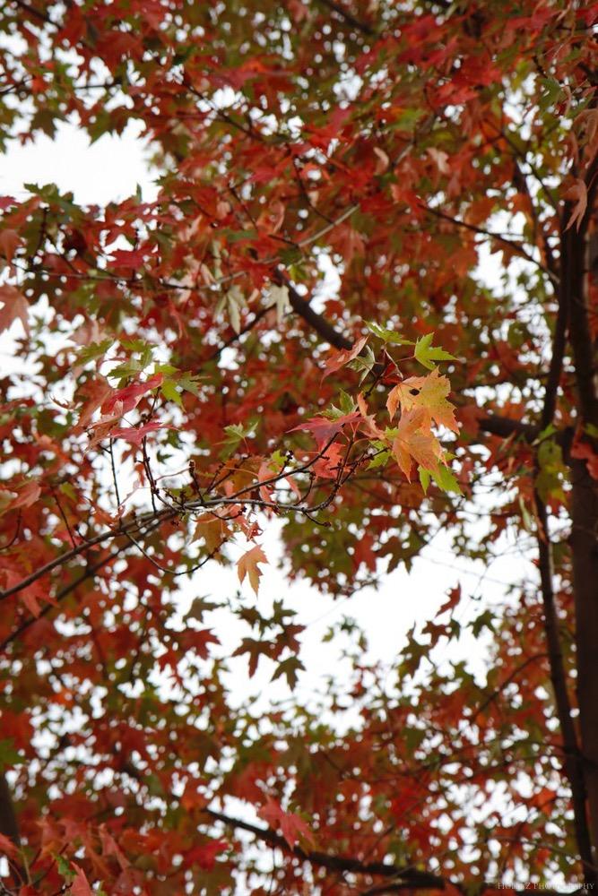 Autumn Nature - Holli Z Photography - 2.jpg