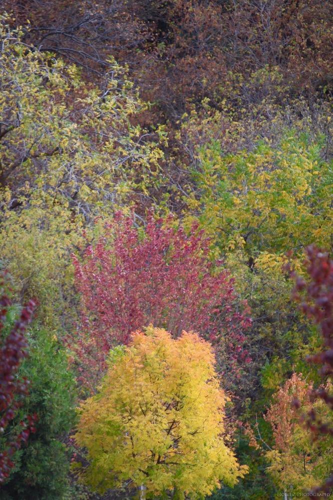 Autumn Nature - Holli Z Photography - 1.jpg