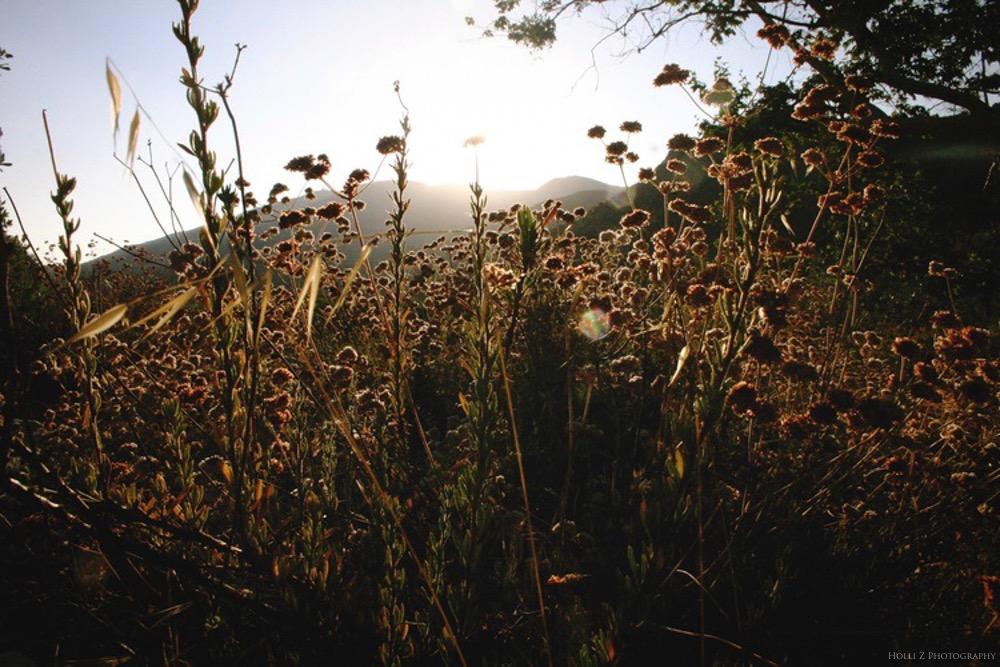 Magic Hour Nature - Holli Z Photography - 1.jpg