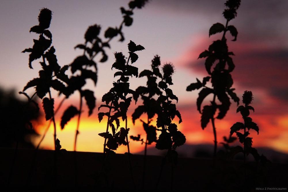 Magic Hour Nature - Holli Z Photography - 5.jpg