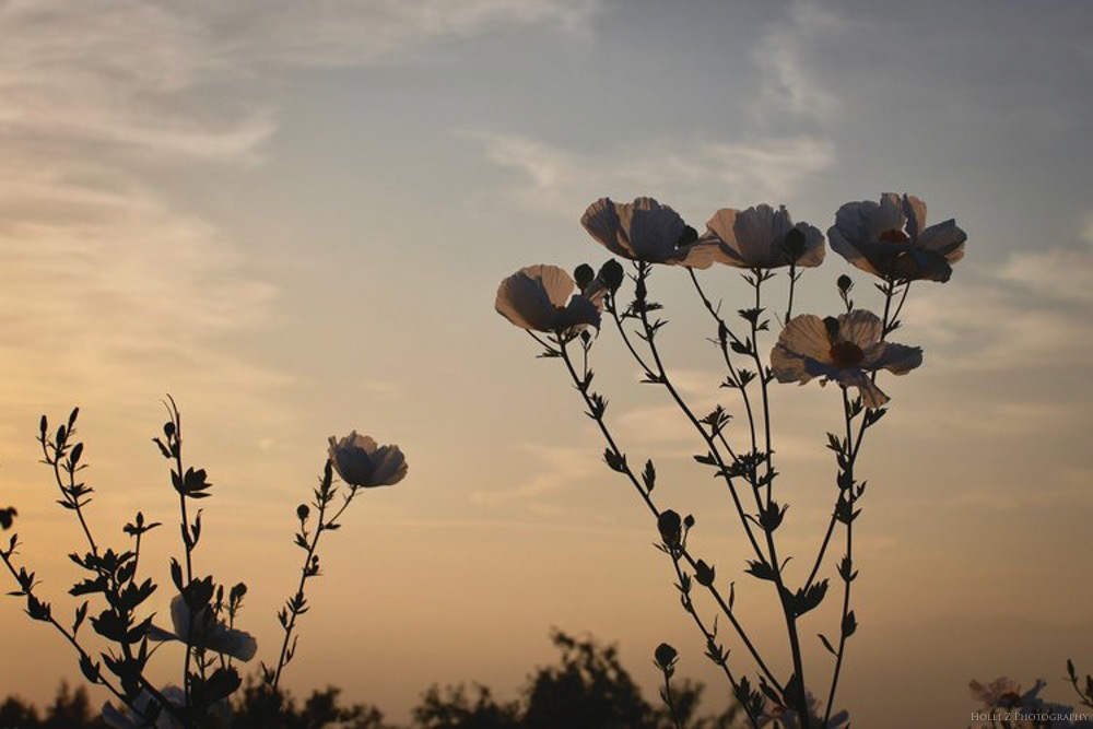 Magic Hour Nature - Holli Z Photography - 6.jpg