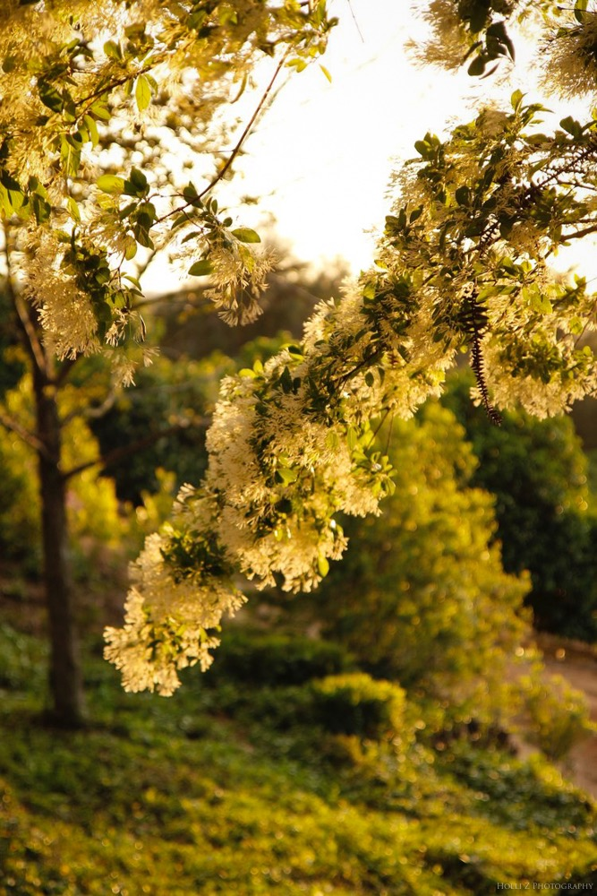Magic Hour Nature - Holli Z Photography - 9.jpg