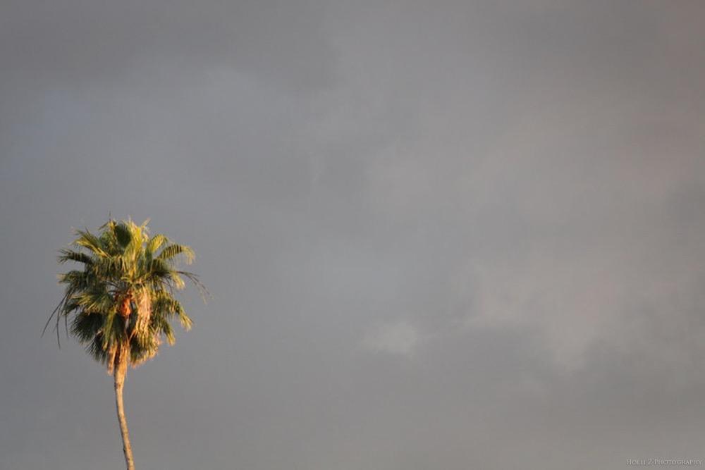 Magic Hour Nature - Holli Z Photography - 10.jpg