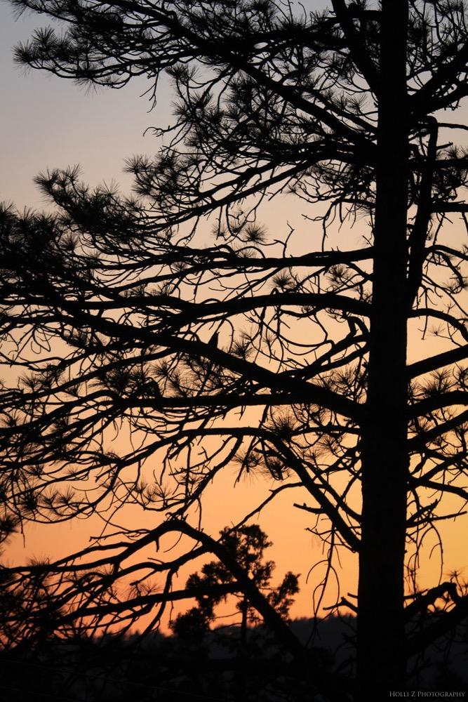 Magic Hour Nature - Holli Z Photography - 16.jpg