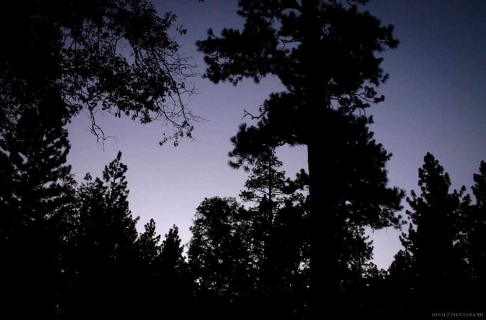 Magic Hour Nature - Holli Z Photography - 17.jpg