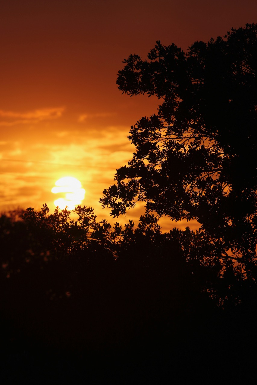Magic Hour Nature - Holli Z Photography - 14.jpg