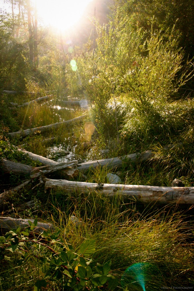Magic Hour Nature - Holli Z Photography - 18.jpg