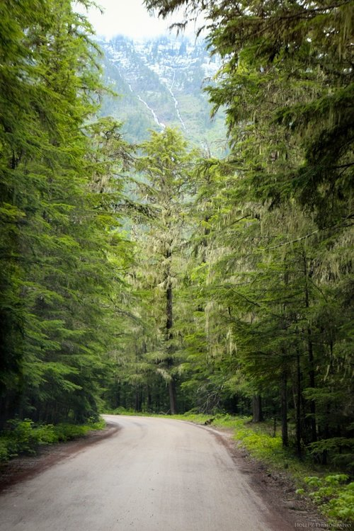 Trees+&+Forests+Nature+-+Holli+Z+Photography+-+2.jpg