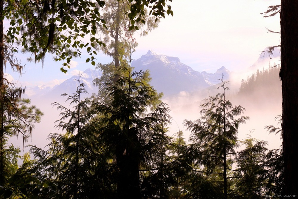 Trees+&+Forests+Nature+-+Holli+Z+Photography+-+5.jpg