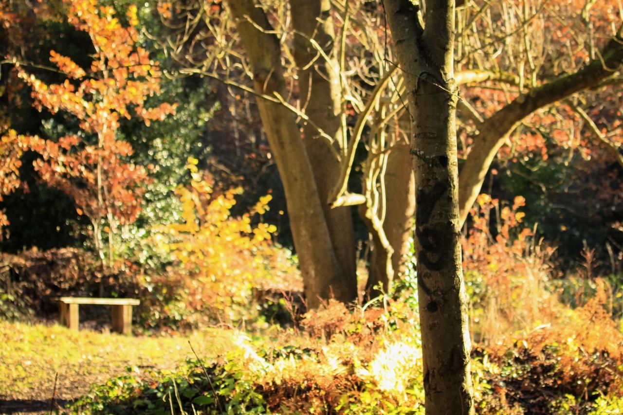 Autumn+Nature+-+Holli+Z+Photography+-+6.jpg