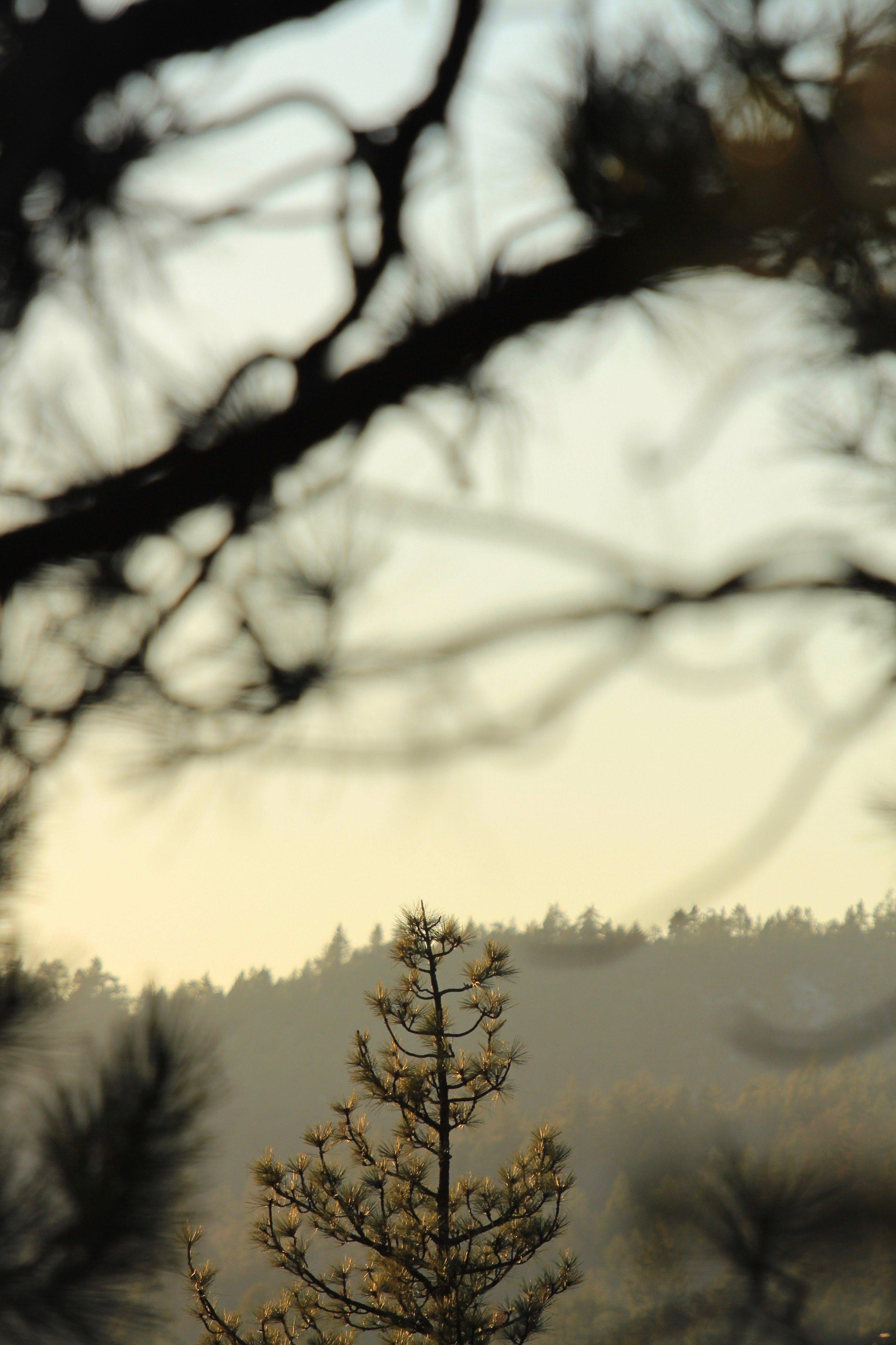 Return to Idy - Holli Z Photography - 2.jpg