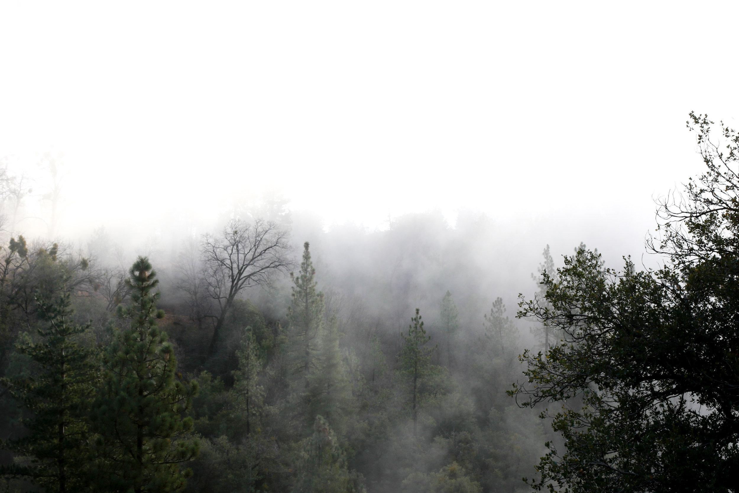 Cloud Forest - Holli Z Photography - 1.jpg