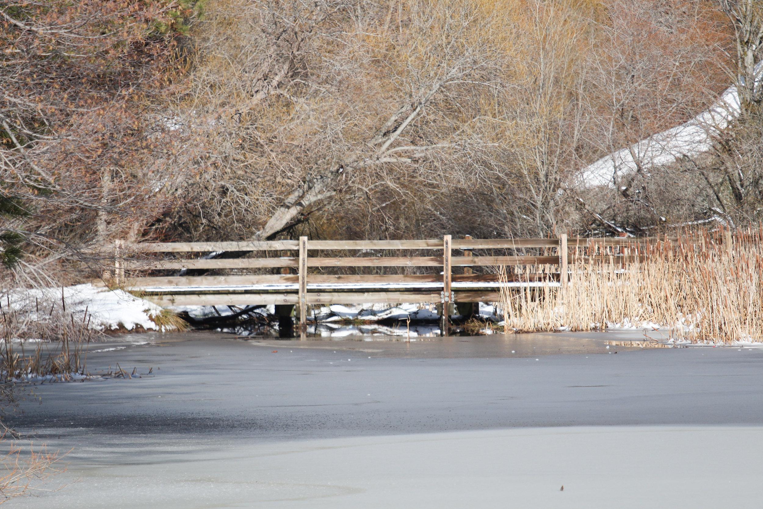 Bridge - Holli Z Photography - 1.jpg