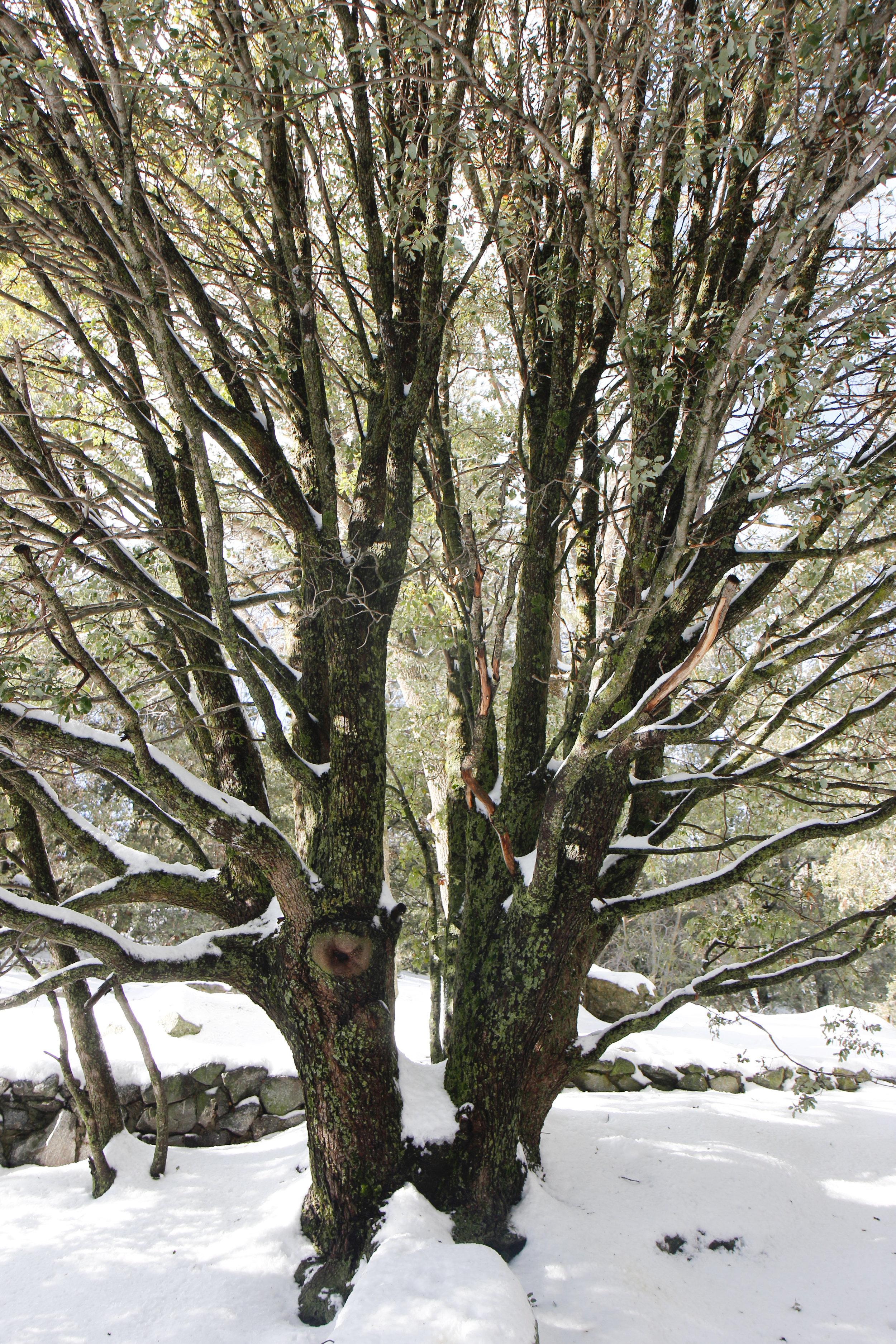 Life Tree - Holli Z Photography - 1.jpg