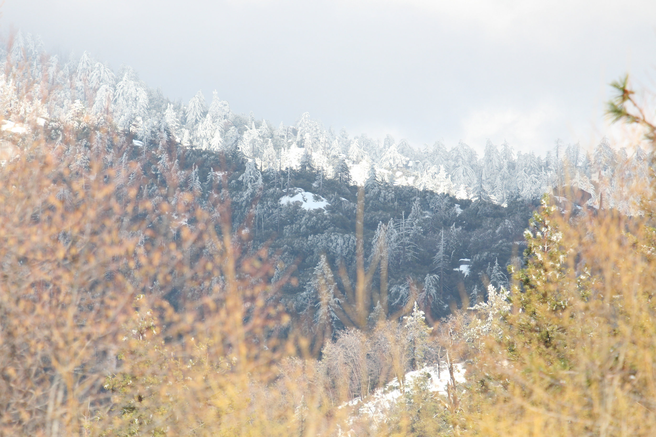 Mountain Colors - Holli Z Photography - 1.jpg