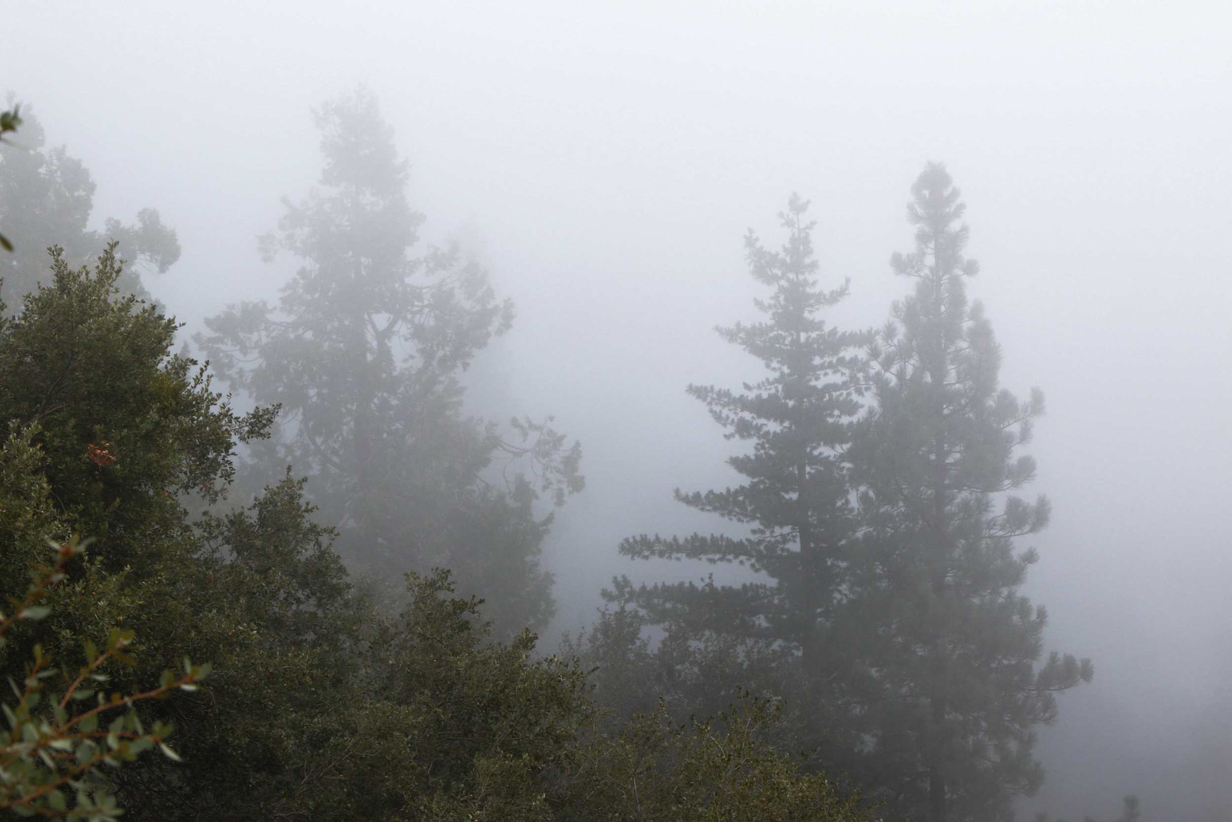 Visibility - Holli Z Photography - 1.jpg