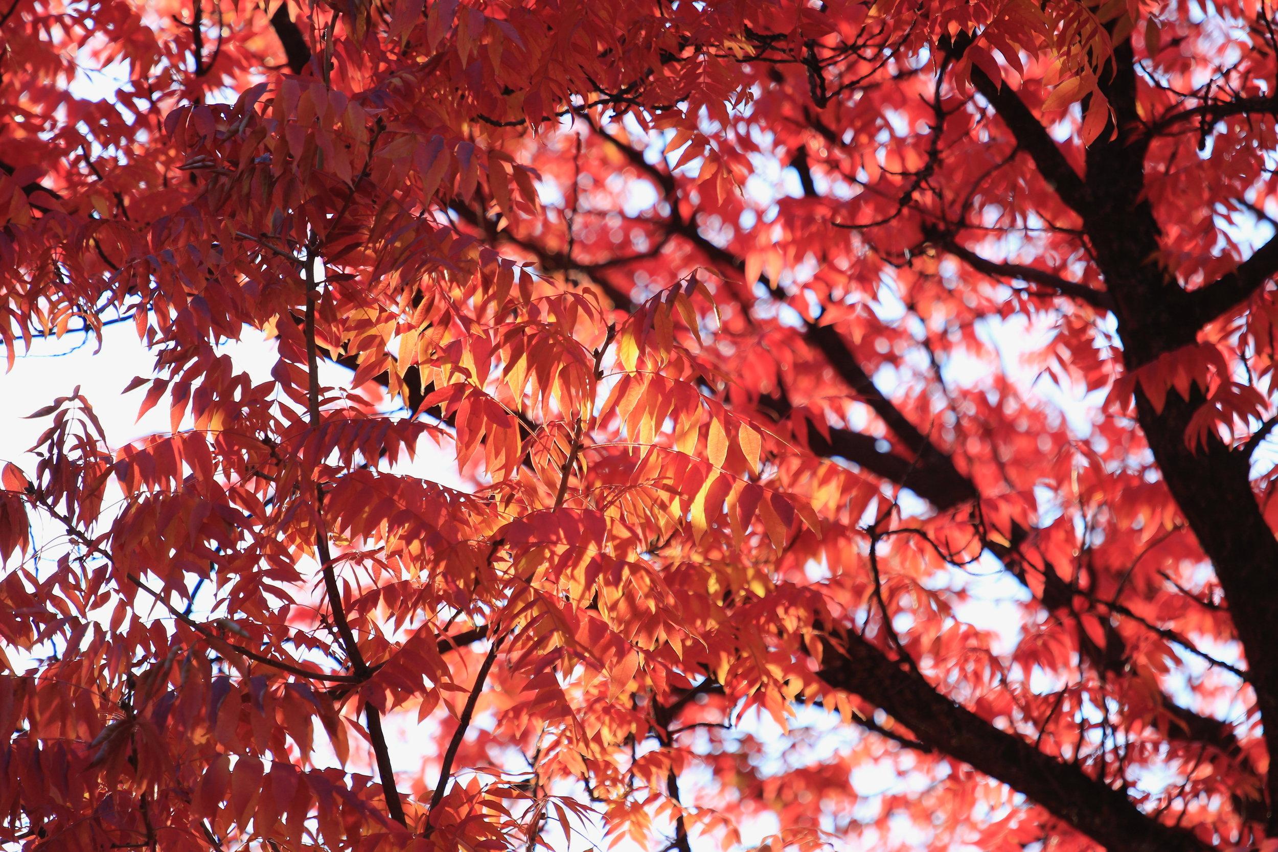 Crimson - Holli Z Photography - 1.jpg