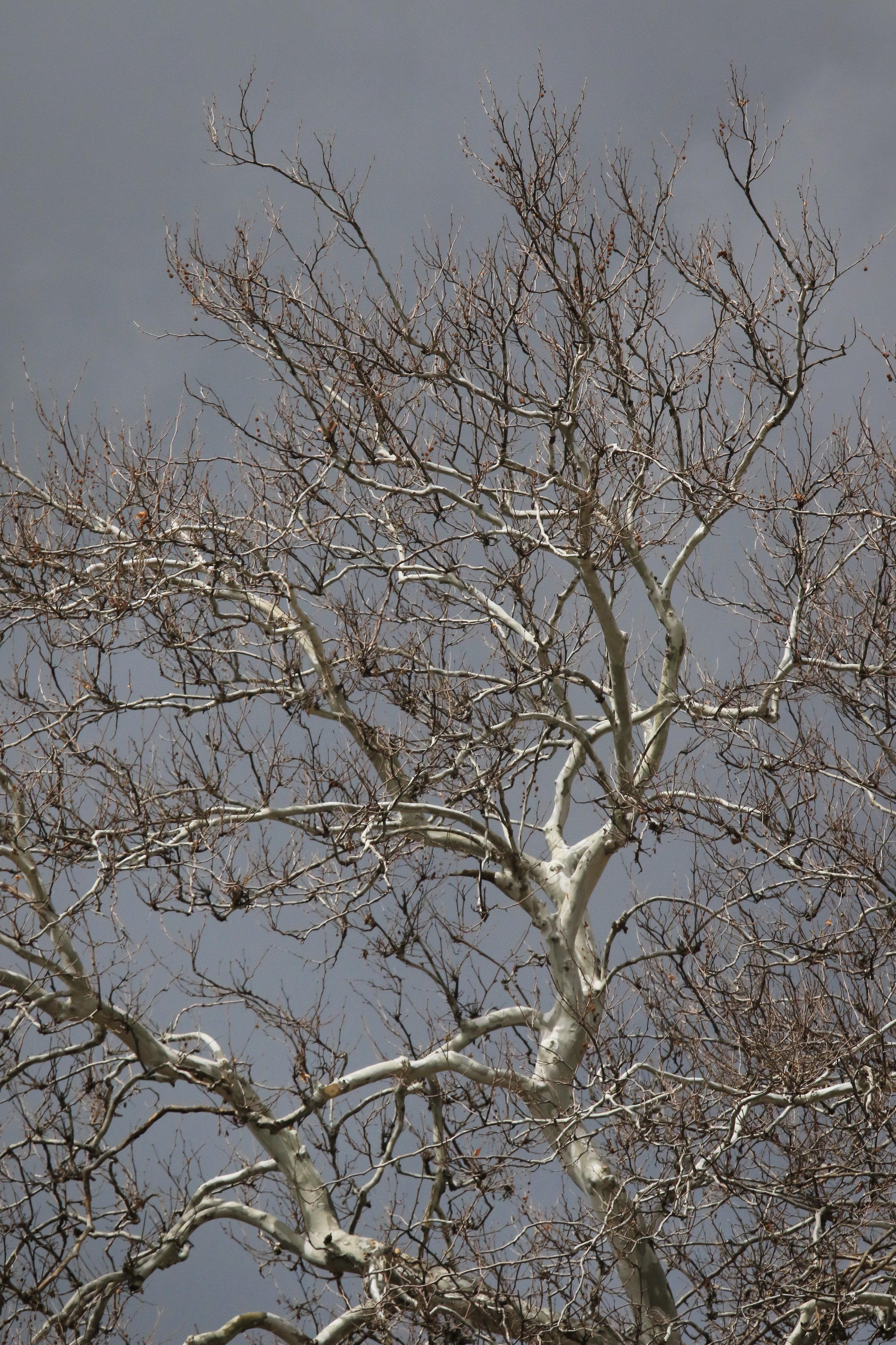 Bleached - Holli Z Photography - 1.jpg