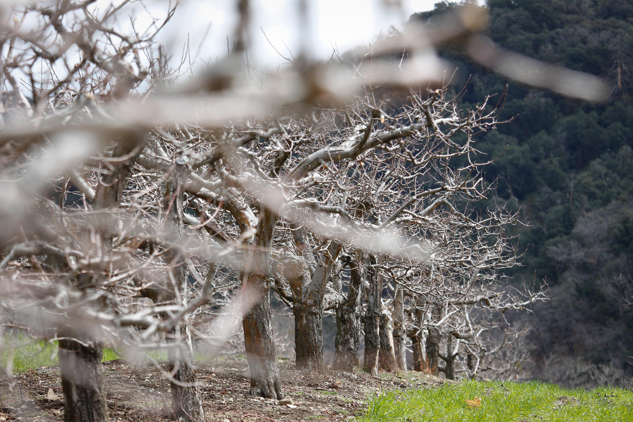 Orchard - Holli Z Photography - 1.jpg