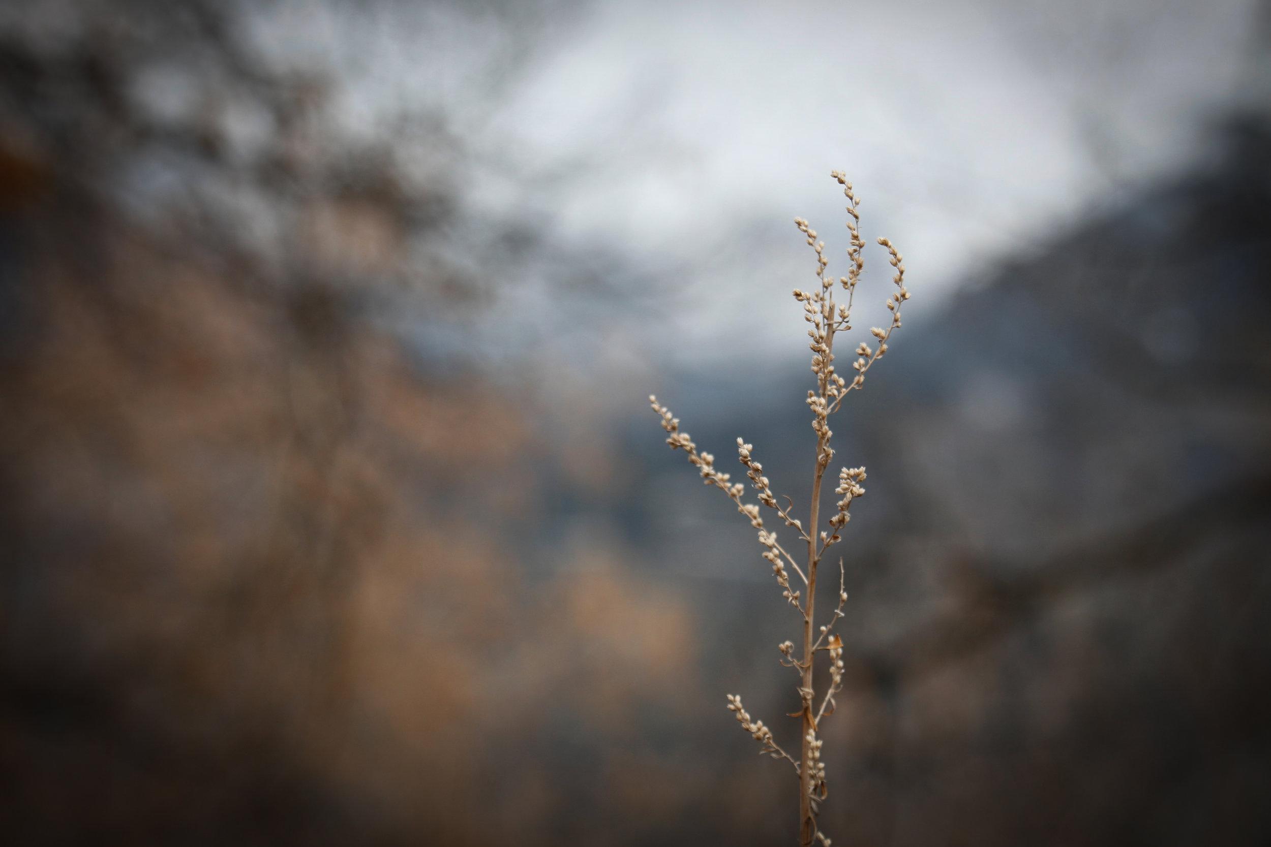Quiet - Holli Z Photography - 1.jpg