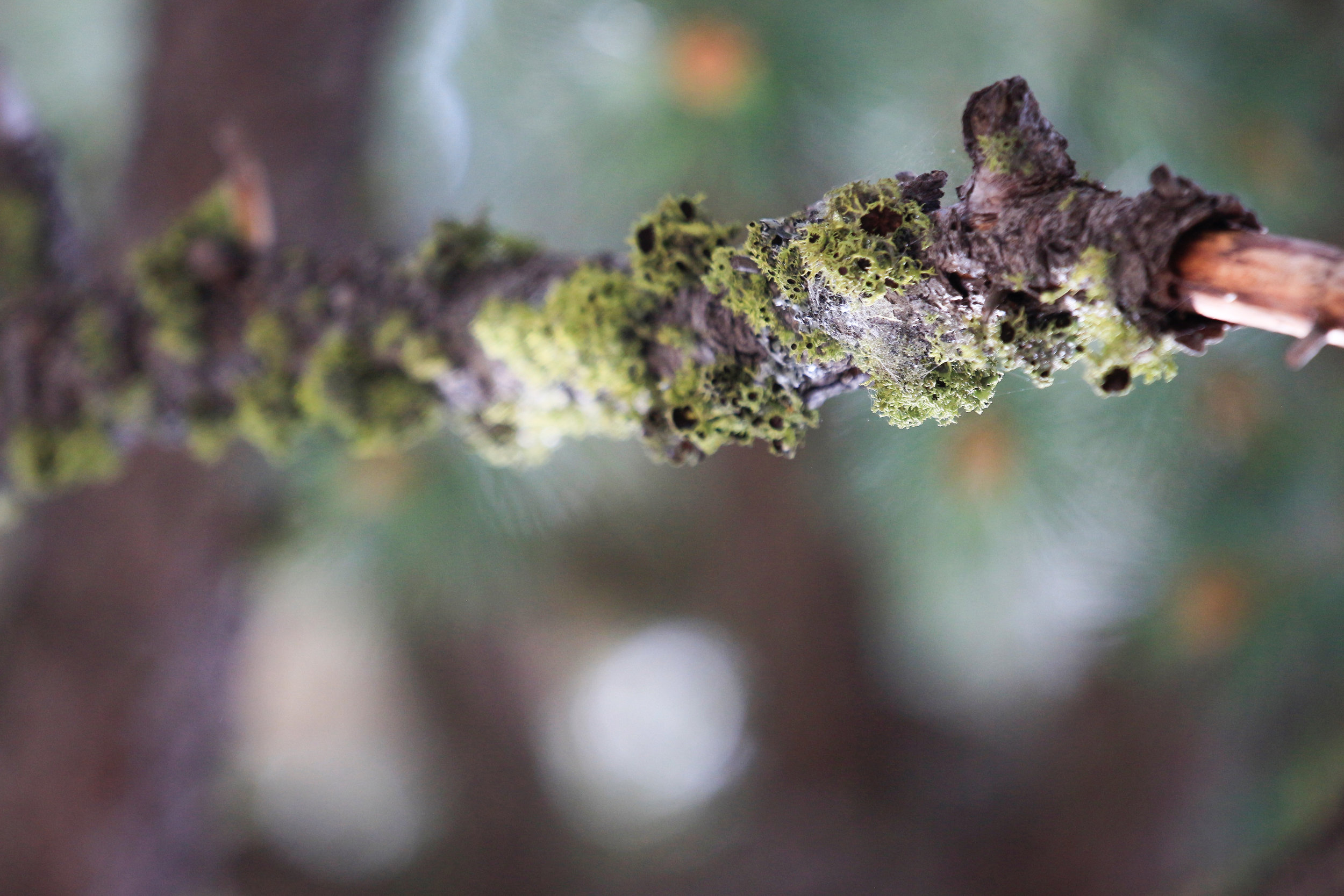 Mossy Branch - Holli Z Photography - 1.jpg