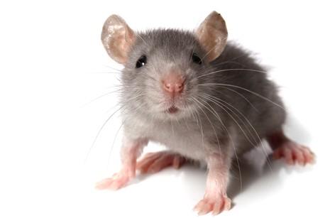 medical-marketing-mouse-story