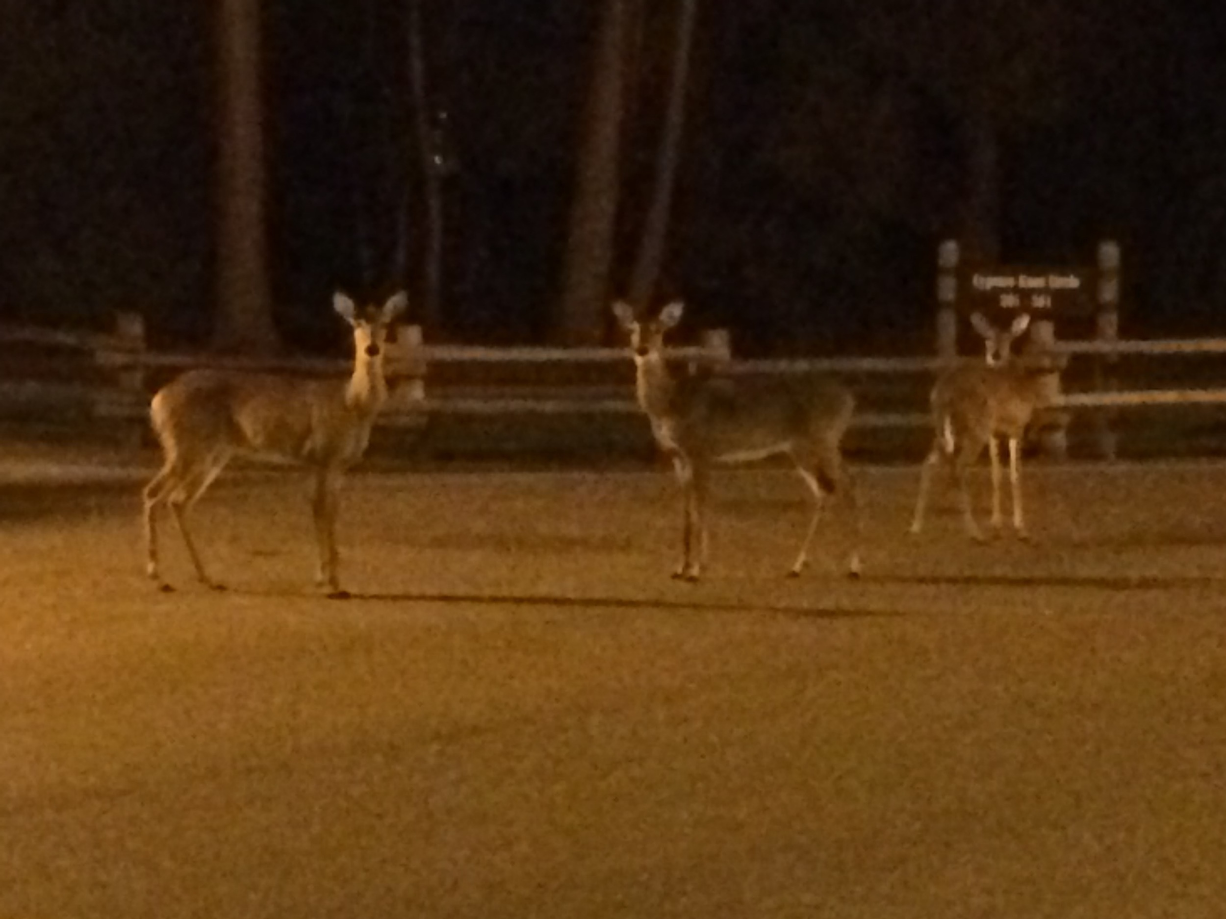 Out of control, the deer.